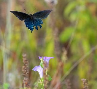 Nature Wildlife  Images