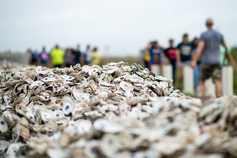 2019_0518-OysterReefRestoration-3105.jpg