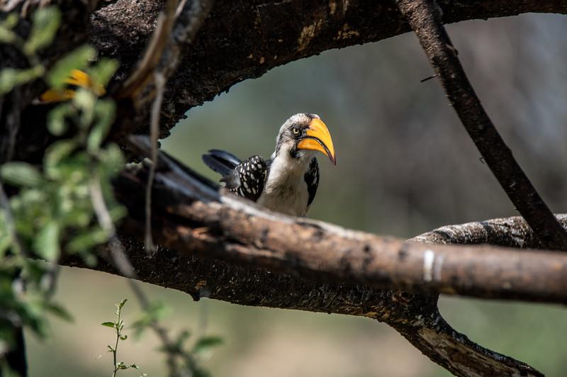 Samburu (35 of 70).jpg