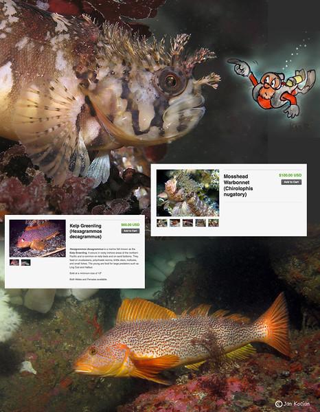 9.13.12 critter sale fish 1  S .jpg