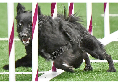 TMAC AKC Agility Trial, September 29-30, 2018