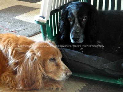042-dogs_shadow_mo-ankeny-03feb13-002-1257