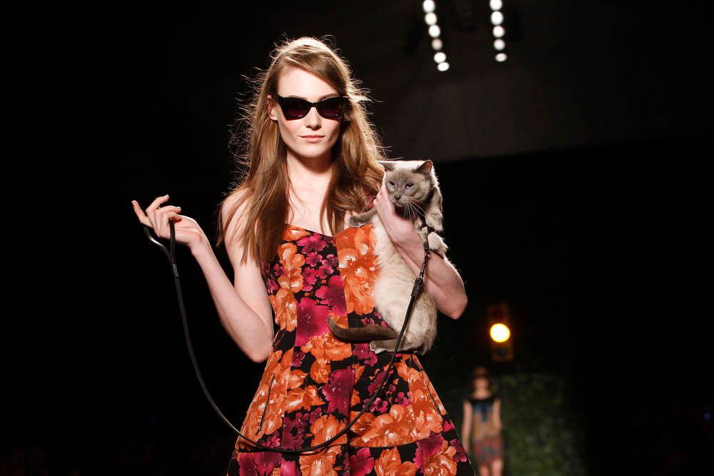 Description of . Purina ONE and Tracy Reese put a leash-trained cat center stage to highlight the True Nature of cats during the Tracy Reese Fall 2013 collection show at Fashion Week, Sunday, Feb. 10, 2013 in New York. (Jason DeCrow/Invision for Purina ONE/AP Images)
