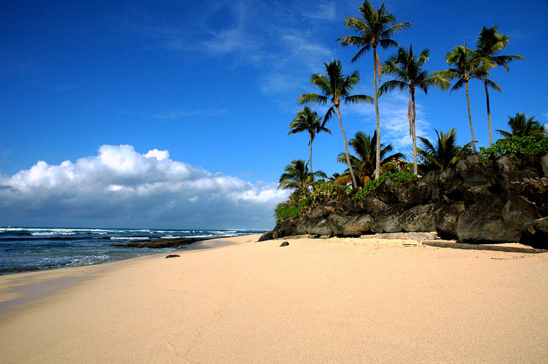 Coconut palm trees on a rocky bluff overlooking the white sandy beach and the turquoise ocean under a blue sky with white clouds on the horizonNorth Shore, Oahu, Hawaii