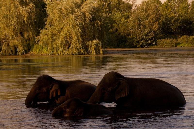 african safari Park-Canada-17.jpg