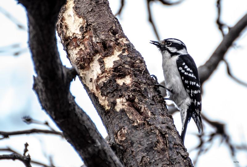 Arboretum Spring Bird bwm-5 - Copy.JPG