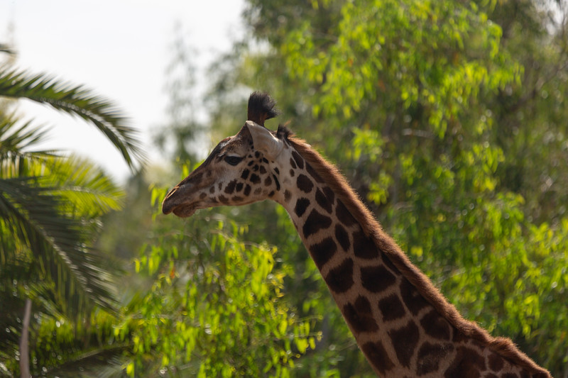 SD Zoo 3.20-135.jpg