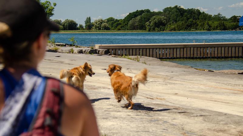 PuppyParty18-115.jpg