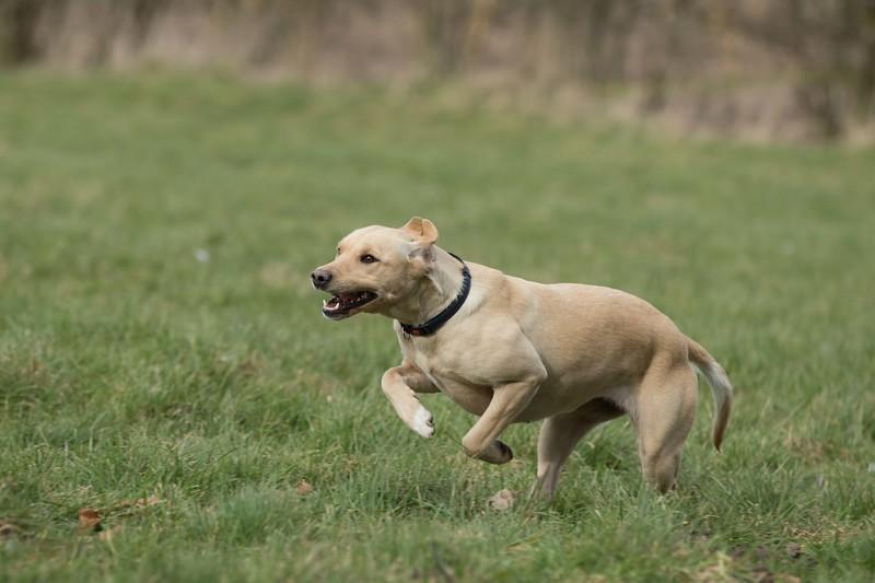 Dogs-5039.jpg