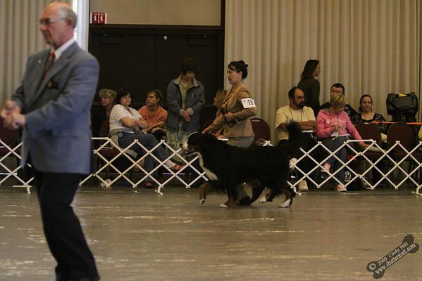 4/30/09 American Bred Dog