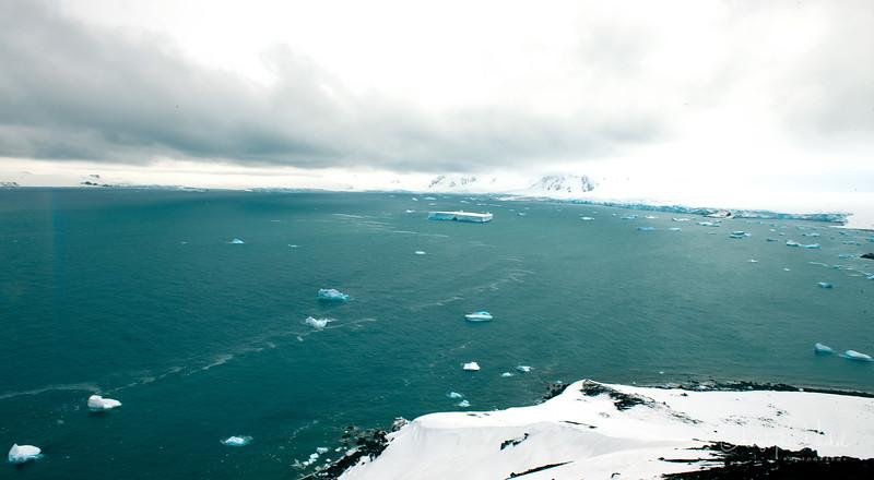 091204_penguin_island_7882.jpg