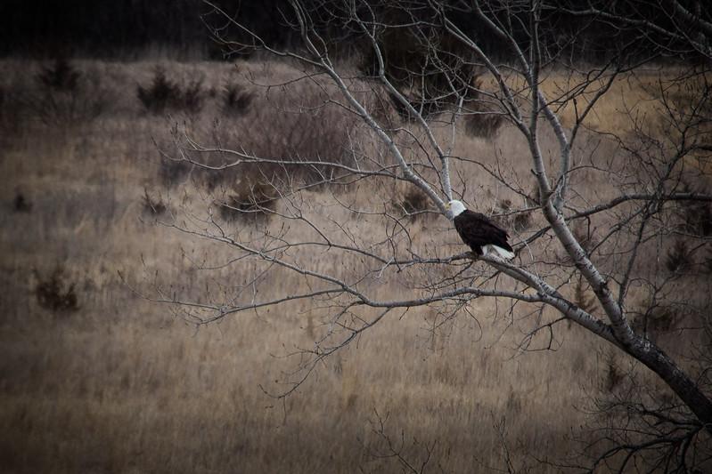 Eagle Land-7237.jpg