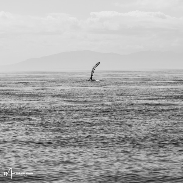 2019-08-31 - Whale Watching-0739_edit.jpg