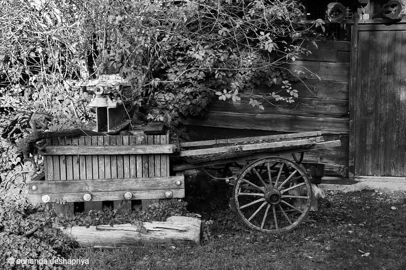 Saillon, Switxerland Oct 18  @ S.Deshapriya-9527-2.jpg