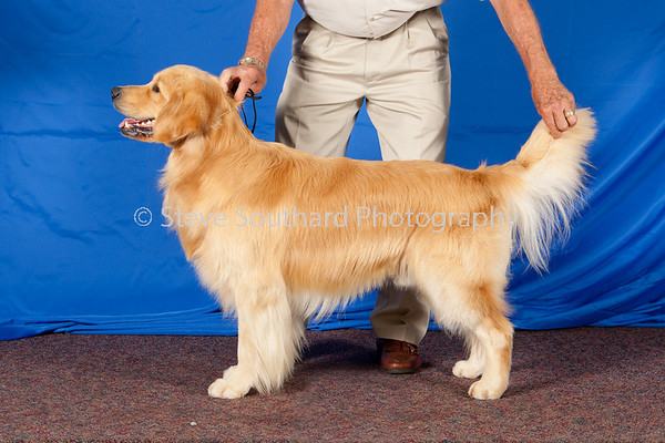 Dog Show - Conformation