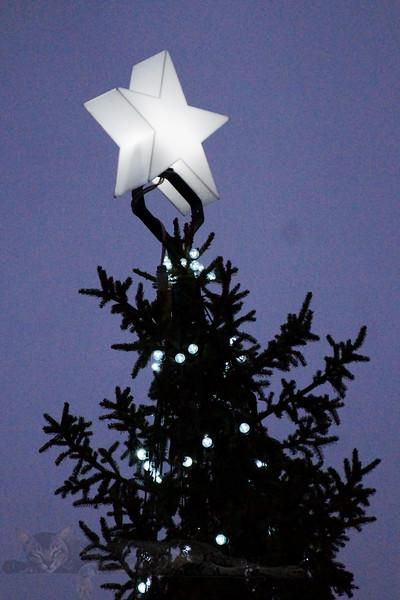 Trafalgar Square - Top of the Christmas Tree