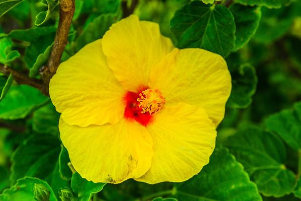Hawaiian Tropical Flowers Kauai Big Island