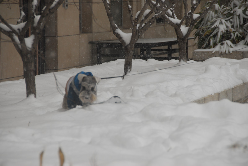 [20100103] 1st 2010 Snow in Beijing (94).JPG
