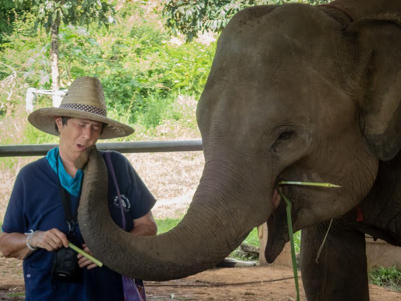Chiang Mai, Thailand Elephants