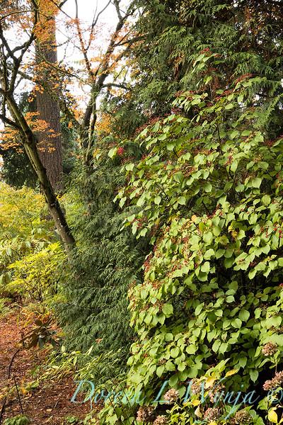 Dietrick fall garden_2109.jpg