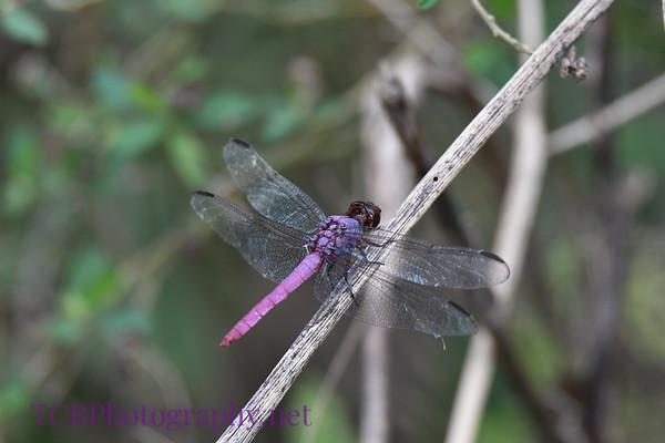 Anahuac National Wildlife Preserve