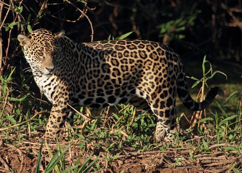 130806-1528-Pantanal-IMG_4057.jpg