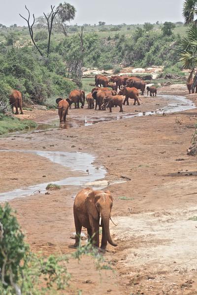 Kenya.Card3.02.2014 303