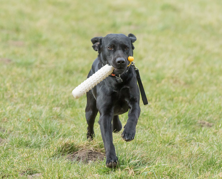 Dogs-4984.jpg