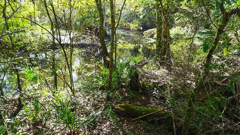 Peeking through underbrush to river