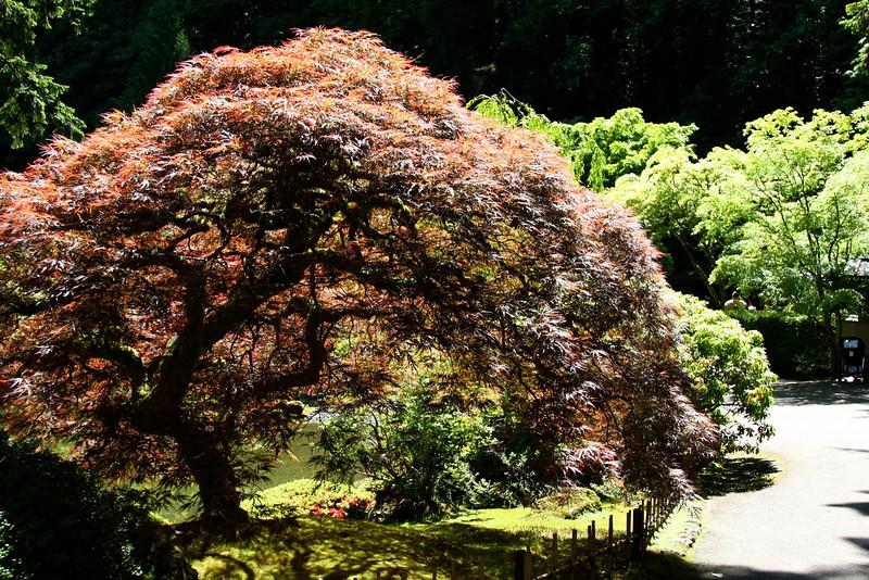 Portland Japanese Garden 6-3-11  1751.jpg