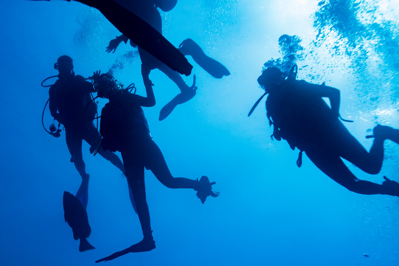 Scuba divers underwater, Tarpon Cayes, Belize Barrier Reef, Lighthouse Reef, Belize