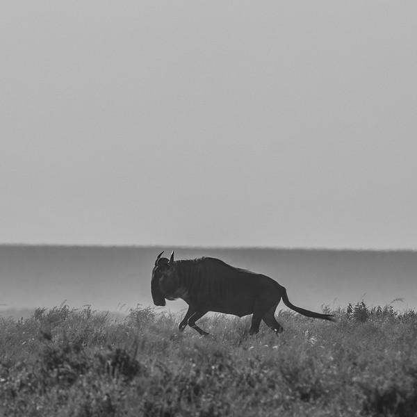 Tanzania_Feb_2018-385.jpg
