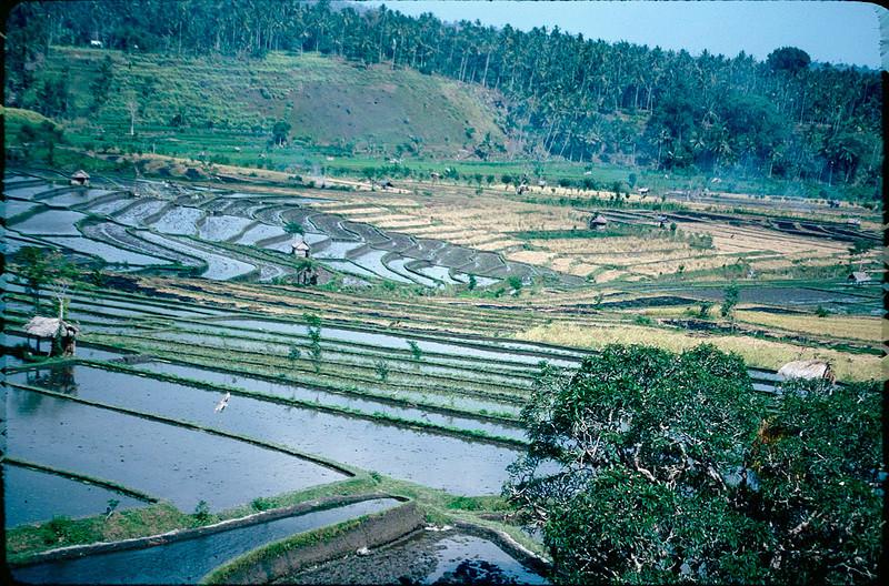 Indonesia1_020.jpg