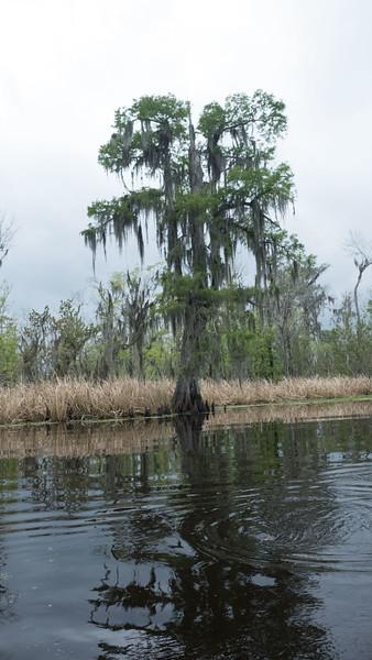 ManchacSwamp-6898.jpg