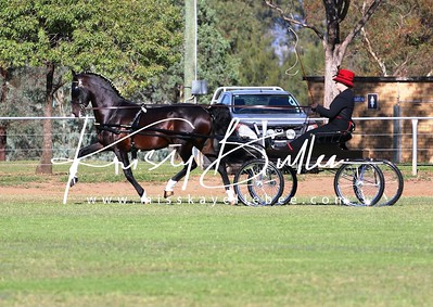 NSW ACDS Show Driving Champs 2017