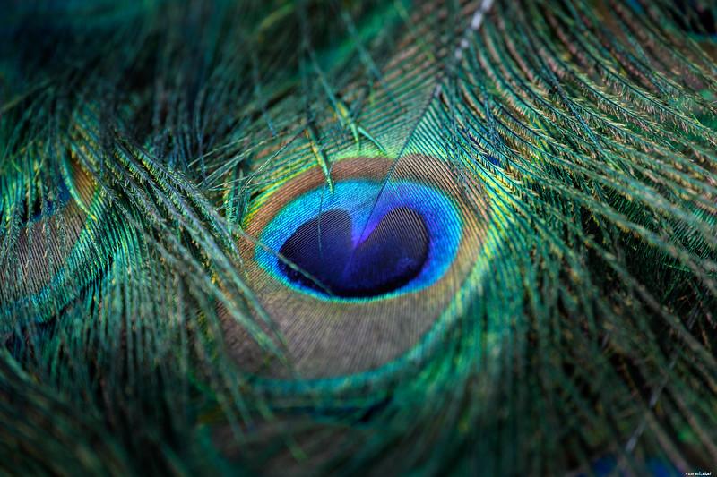 Eye of the rainbow