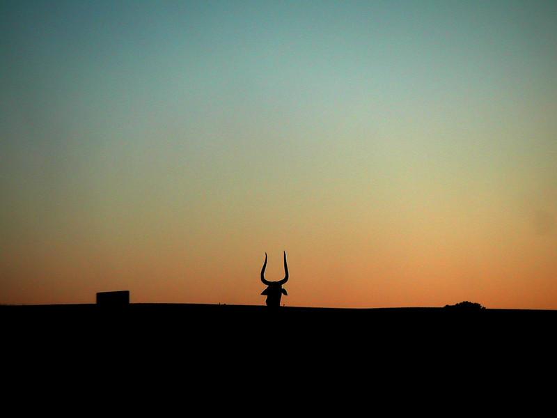 23 Bull Horns.jpg