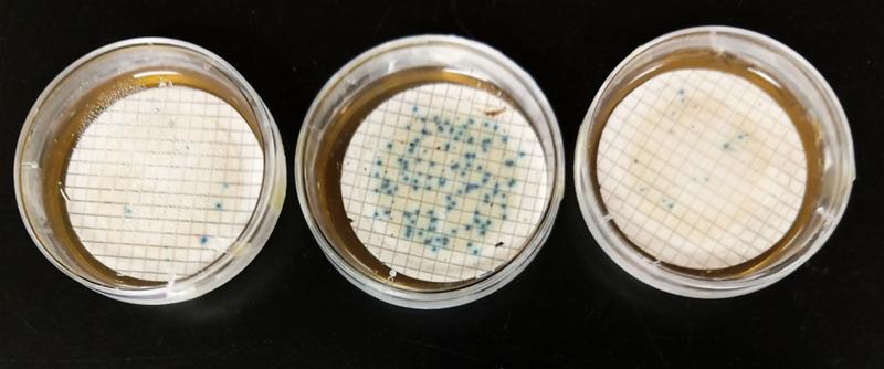 bacteria1.png