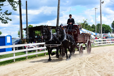 Men's Percheron Team