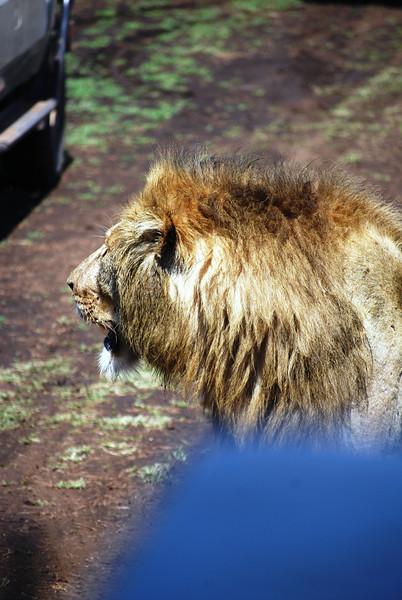 Ngorongoro (105).JPG