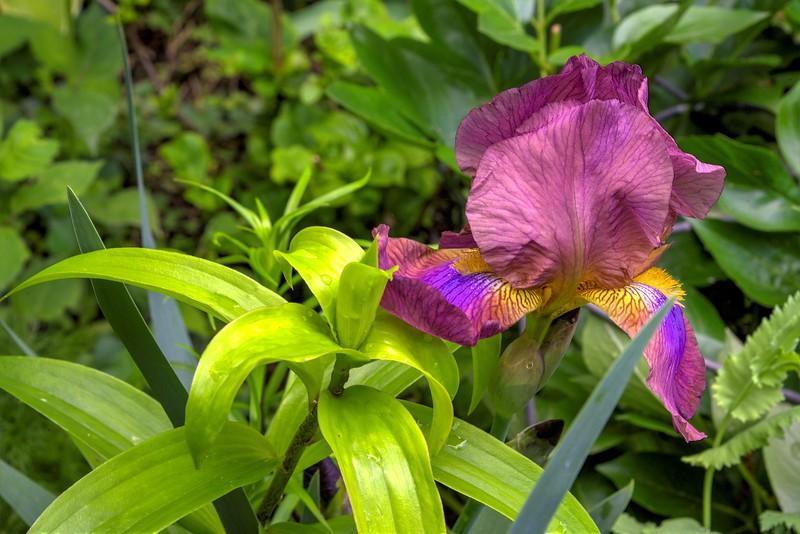 Garden 1, 106.jpg