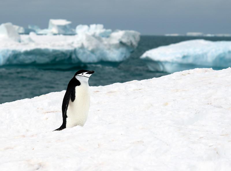 091204_penguin_island_8261.jpg