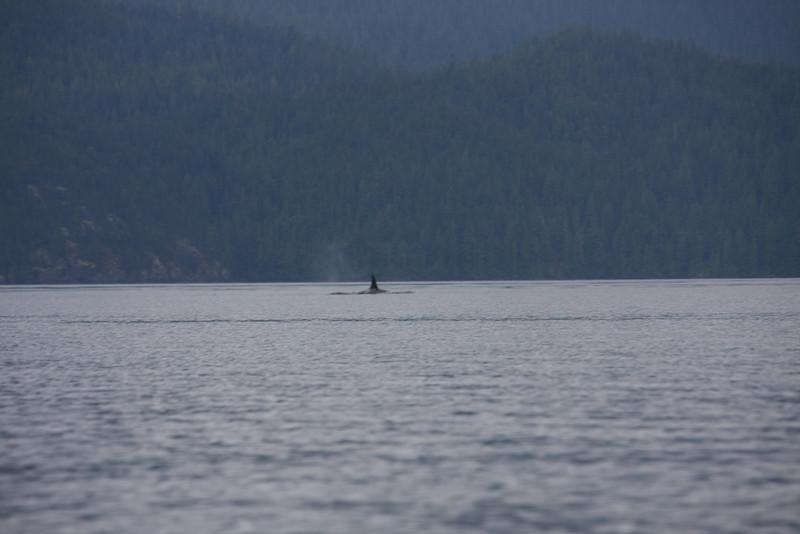 A 12 Resident Orca