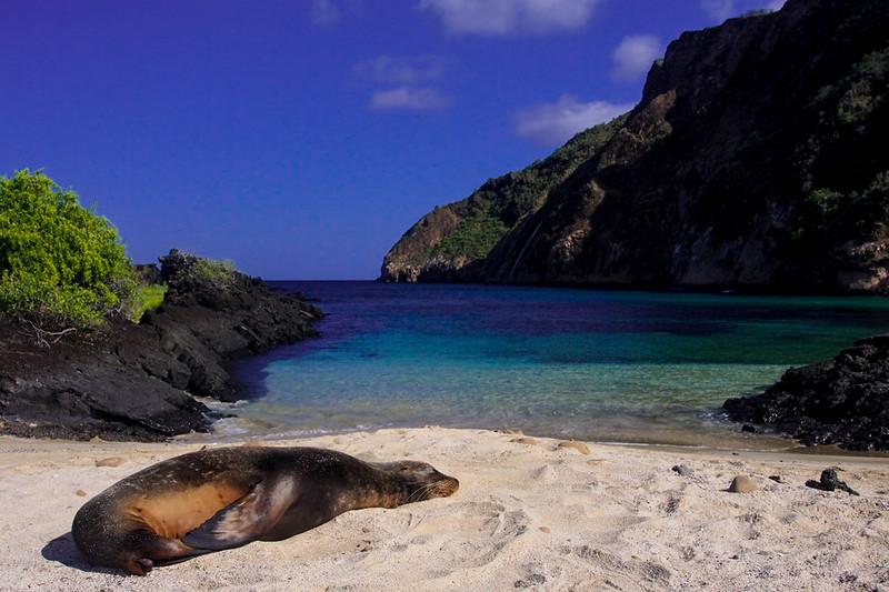 sea lion on cerro brujo.jpg