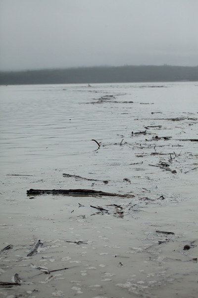 Alaska Copper River-9754.jpg