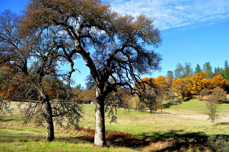 oak shadows 11-25-2012.jpg