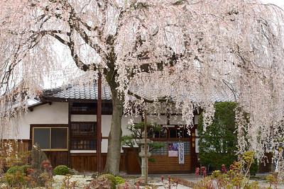 Honman-ji — 本満寺