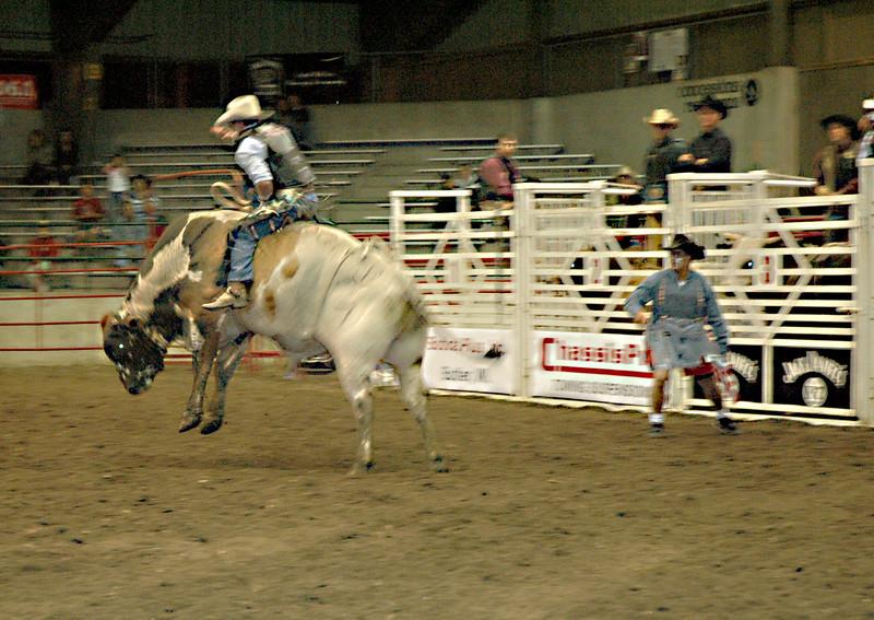 rodeo 167 bull.jpg