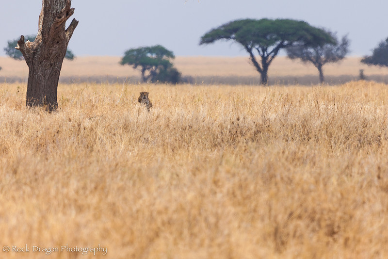 South_Serengeti-44.jpg