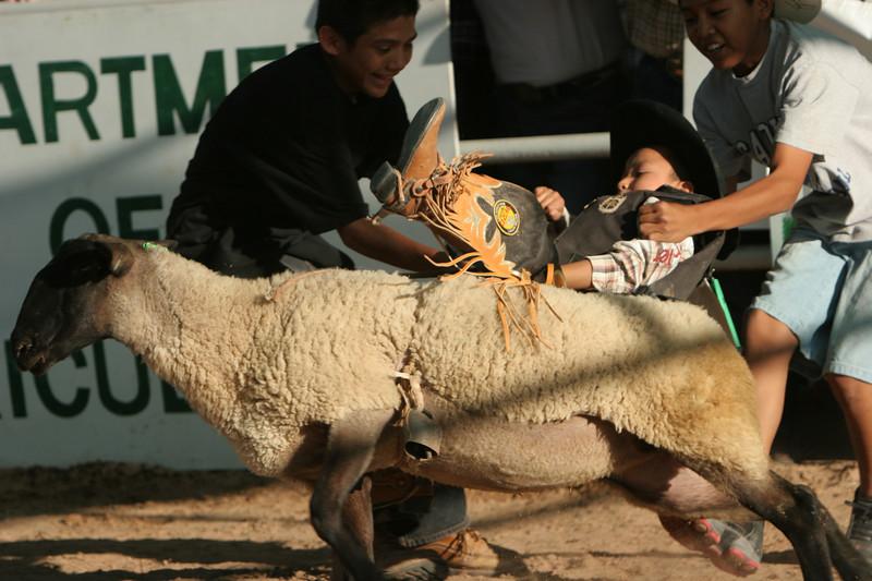 Rodeo  1167.jpg
